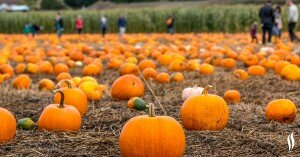 Three Halloween traditions that can cause back pain